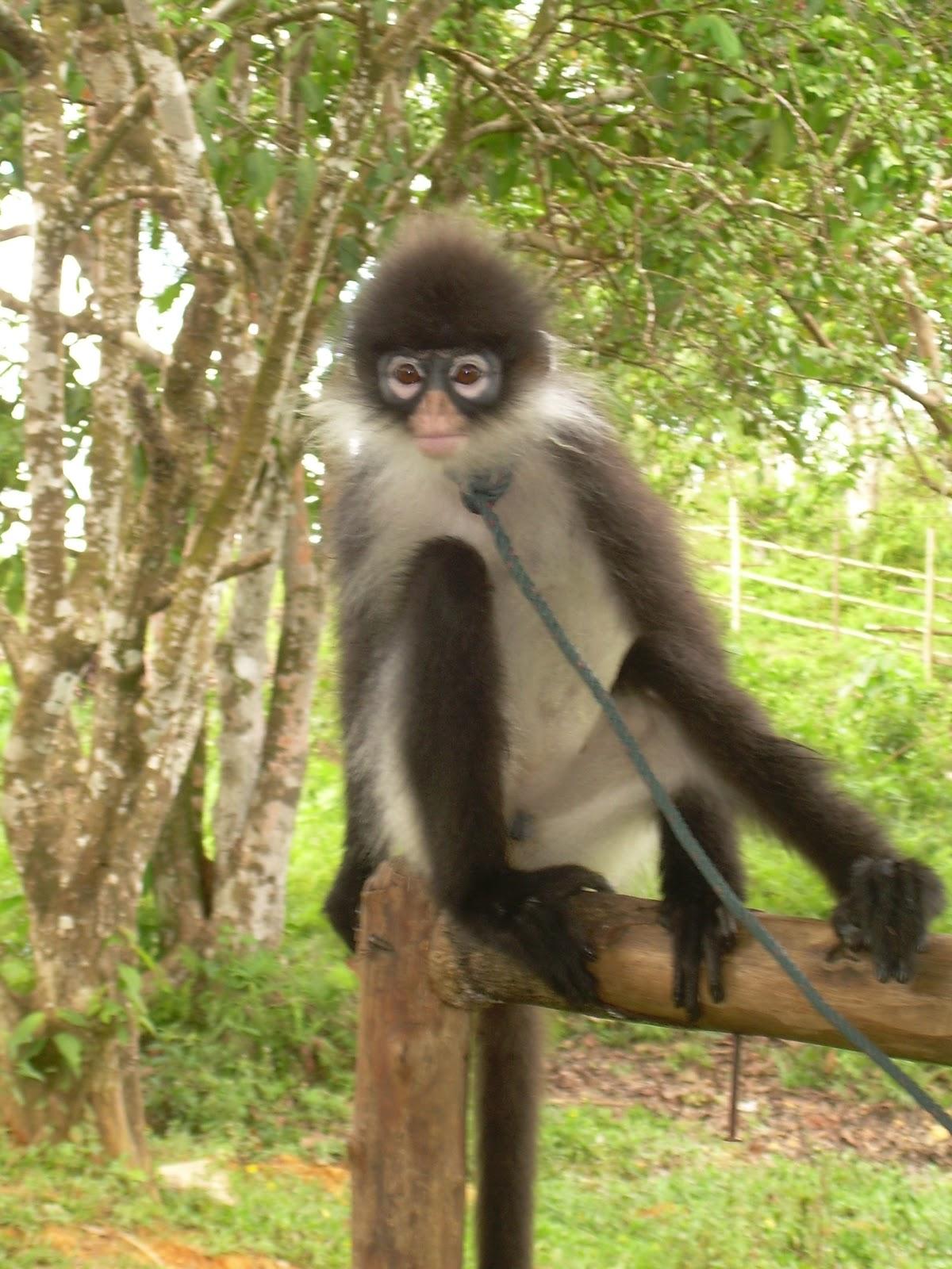 440 Koleksi Gambar Hewan Endemik Di Sumatera Gratis Terbaik