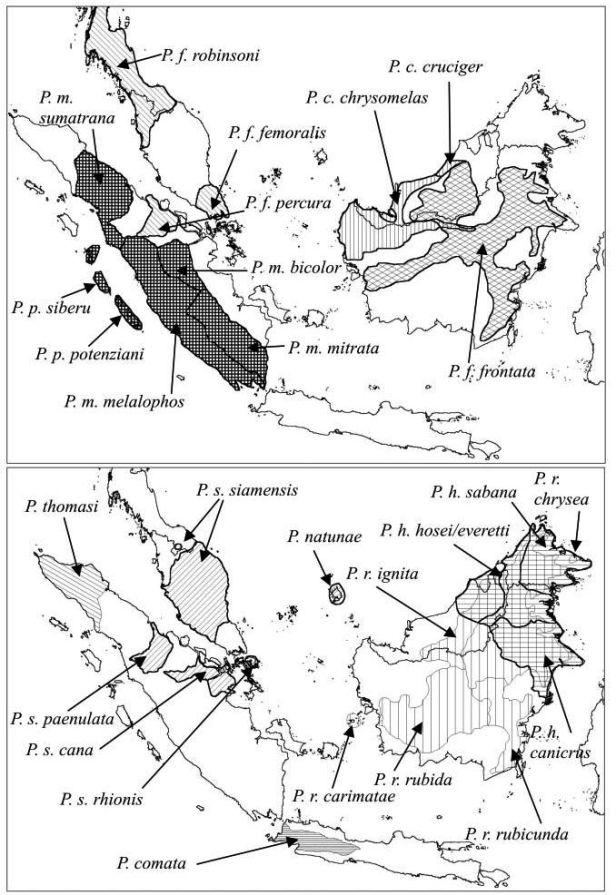 Peta sebaran spesies Presbytis berdasarkan taksonomi Grooves pada 2001 (Primate Report, 2004)