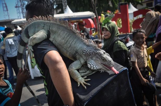 Makassar Culture Festival