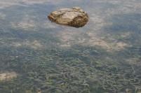 Tumbuhan laut di Pulau Putri.