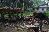 Seorang warga Midai, Natuna mengupas kelapa untuk dijemur sebelum dibuat kopra.