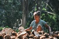 Seorang warga Midai, Natuna menyiapkan kelapa untuk diasapi dalam proses pembuatan kopra.