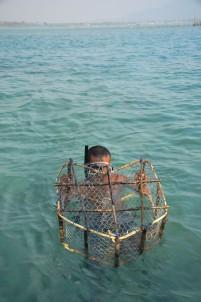 Nelayan lokal mengangkat bubu yang telah berisi ikan kerapu di lepas pantai Kota Ranai, Natuna
