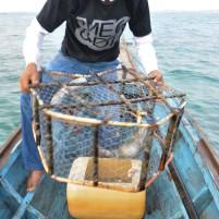 Nelayan lokal mengeluarkan ikan kerapu dari bubu di lepas pantai Kota Ranai Natuna