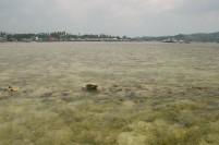 Medan karang di pesisir Kota Ranai saat surut.