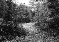 Jalan setapak memasuki hutan wisata alam Muka Kuning. Hutan ini merupakan satu-satunya hutan konservasi di Pulau Batam.