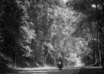 Jalan di tengah hutan Nongsa.